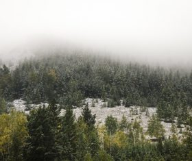 White snow falling on forest scenery Stock Photo
