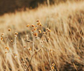 Wild delicate flowers on meadow Stock Photo