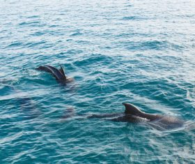 Wild dolphins joyful in sea Stock Photo