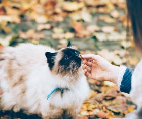 Woman and cute cat pet Stock Photo