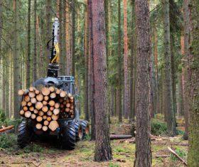 Wood loader Stock Photo 01