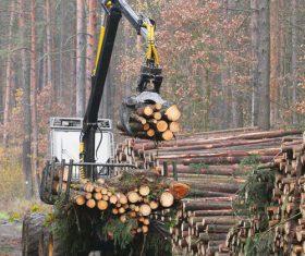 Wood loader Stock Photo 09