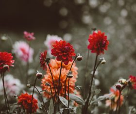 colorful fresh flowers in garden Stock Photo