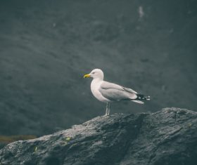 cute small bird on rock Stock Photo