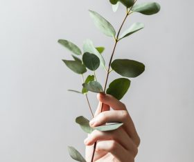 hand holding green leaves branch Stock Photo