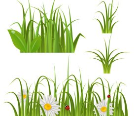 ladybug with grass and and white flower vector 01