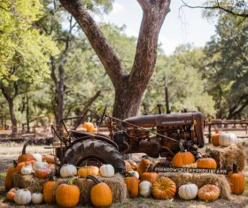pumpkins farm old heavy machine Stock Photo