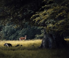 wild deer in nature Stock Photo