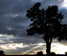 A tree under the dark clouds Stock Photo