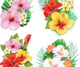 Arrangement from hibiscus flowers vector