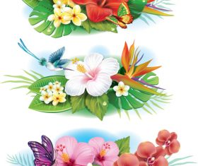 Arrangement from tropical flowers vector