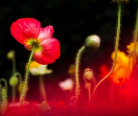 Beautiful blooming red flower Stock Photo