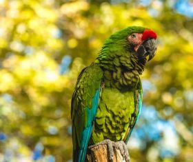 Beautiful green parrot in nature Stock Photo