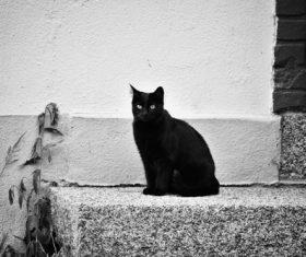 Black cat basking in the sun Stock Photo