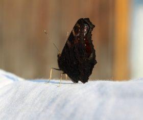 Black swallowtail butterfly Stock Photo