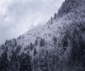Black white picture of snowy forest scenery Stock Photo
