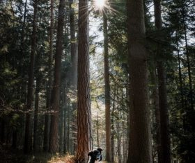 Border collie in the forest Stock Photo