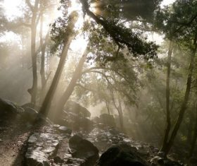 Bright sun rays in forest Stock Photo