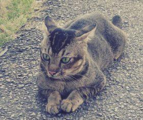 Cat lying on the roadside Stock Photo 02