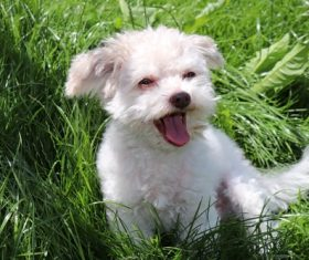 Cute pet dog in the grass Stock Photo