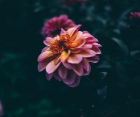 Dark flowers Stock Photo
