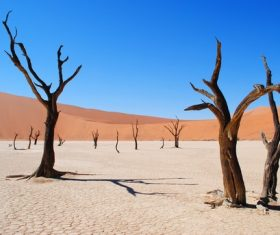 Dead trees in the desert Stock Photo