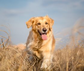 Dog running in weeds Stock Photo