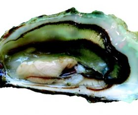 Fresh oysters Stock Photo 02