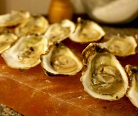 Fresh oysters Stock Photo 04