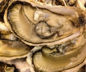 Fresh oysters Stock Photo 05