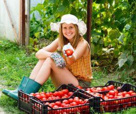 Girl picking fresh tomato Stock Photo