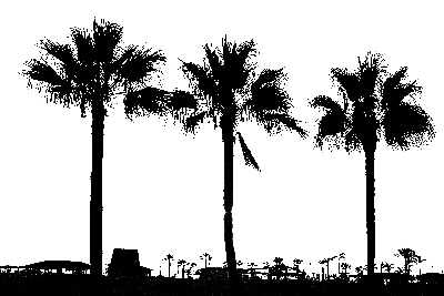 Hand Drawn Palm Trees Photoshop Brushes Free Download