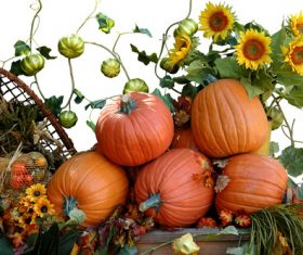 Harvest pumpkins and sunflowers Stock Photo