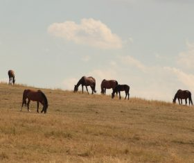 Horses grazing on pasture meadow Stock Photo