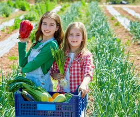 Little girl picking vegetables in vegetable field Stock Photo