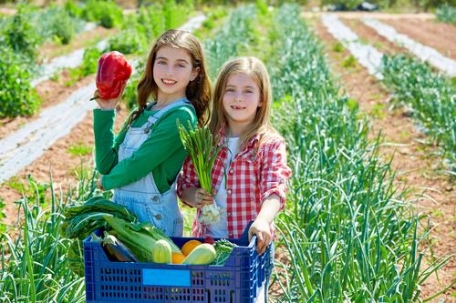 Little girl picking vegetables in vegetable field Stock Photo
