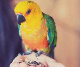 Parrot on the palm Stock Photo