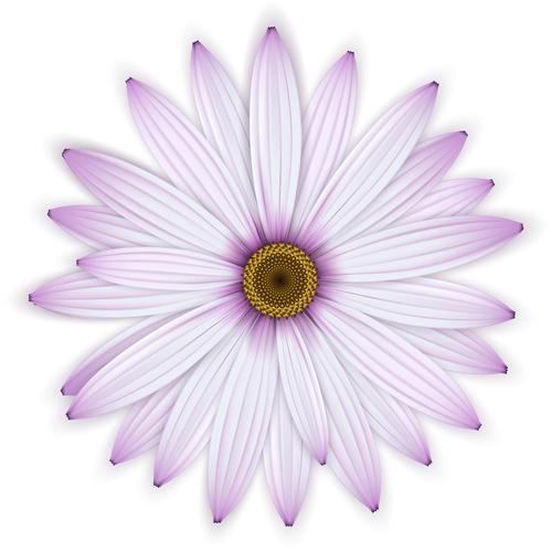 Pink chrysanthemum background vectors 03
