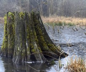 Residual roots in the river Stock Photo