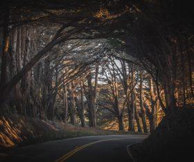 Road shading trees Stock Photo