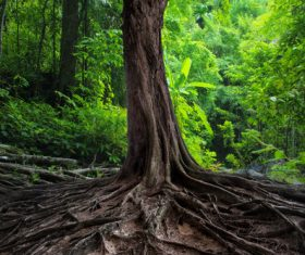 Robust a tree root Stock Photo 01