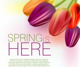 Spring flower with white background art vector 01