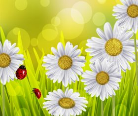 Spring white flower and blurs background vector 02