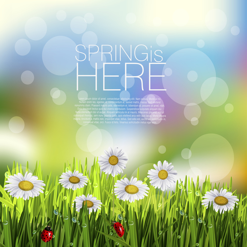 Spring white flower and blurs background vector 03