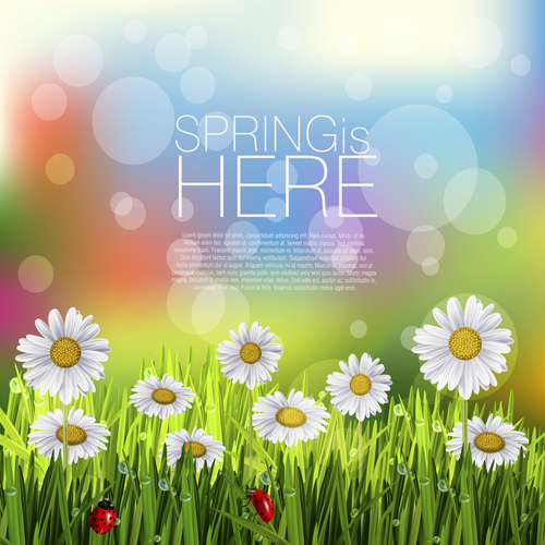 Spring white flower and blurs background vector 04