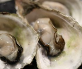 Steamed oyster Stock Photo 02