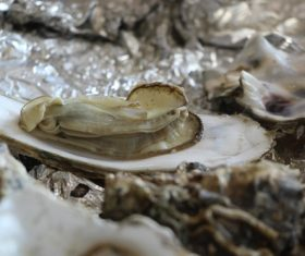 Steamed oyster Stock Photo 03