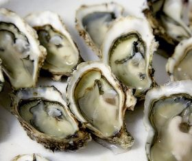 Steamed oyster Stock Photo 04