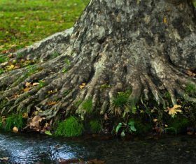 Stream and old tree roots Stock Photo 02