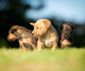 Three cute puppies on the grass Stock Photo